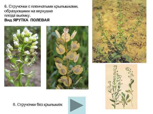 Школьный атлас определитель цветковых растений