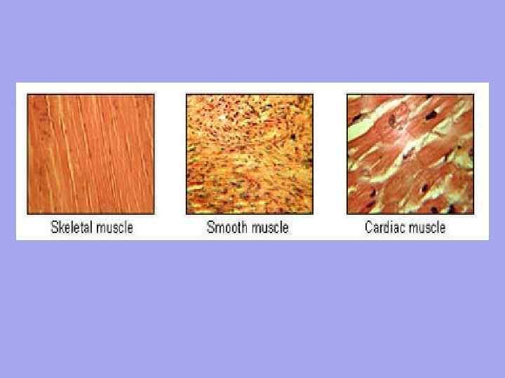 A porc szöveti jellemzői, összetevői, típusai, funkciói
