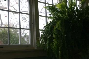 Ferns at Breakfast