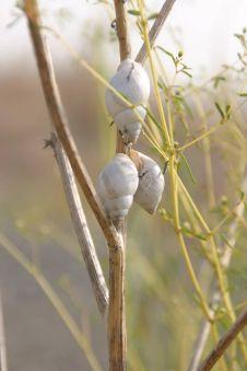 snails
