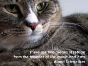Cat Quotes & Images
