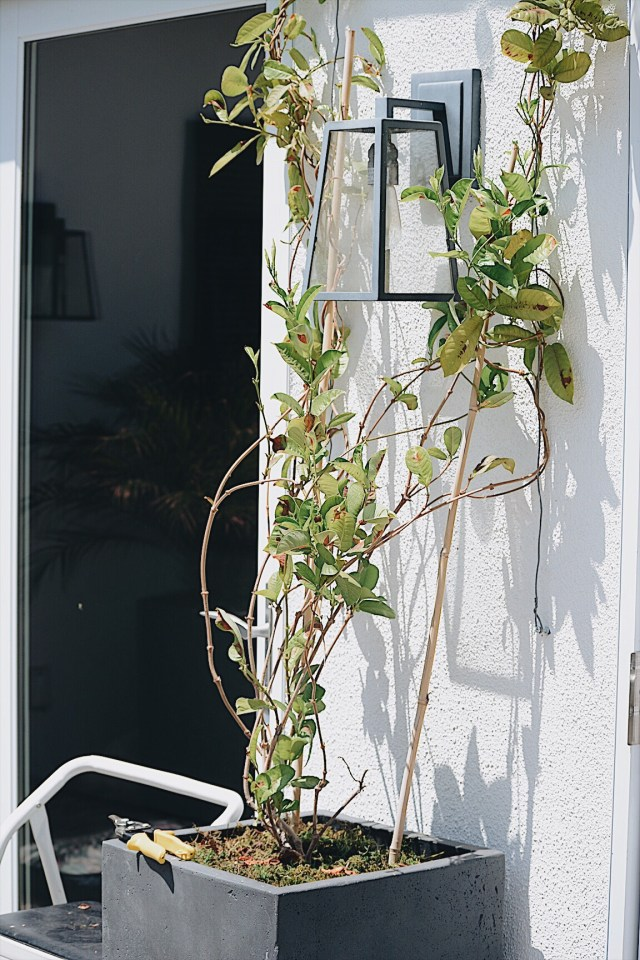 Pruning for growth