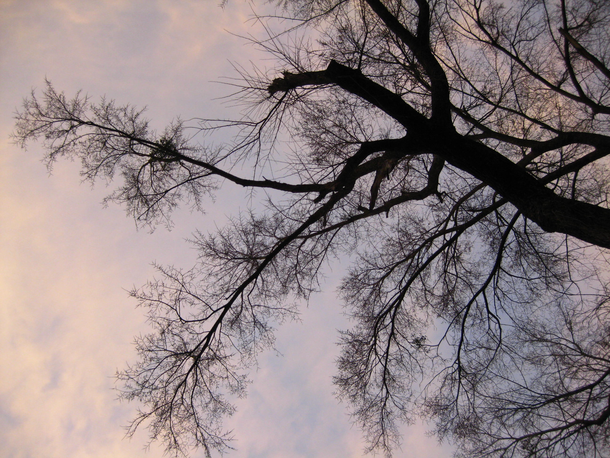 Looking up on a late afternoon in February.