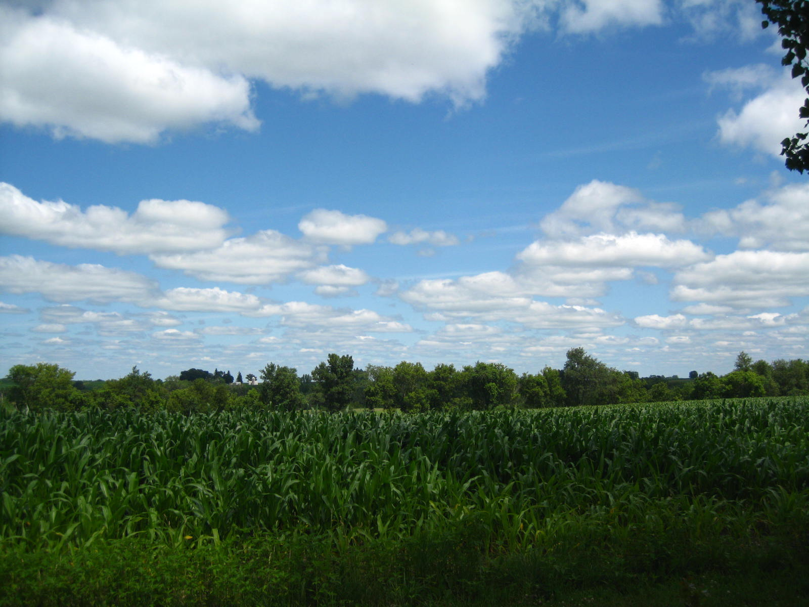 Cornfields behind the house.