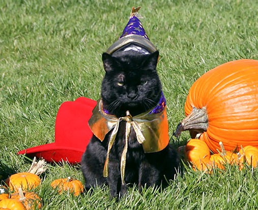 India gets ready for a Boo-tiful Halloween, Oct. 31, 2007.
