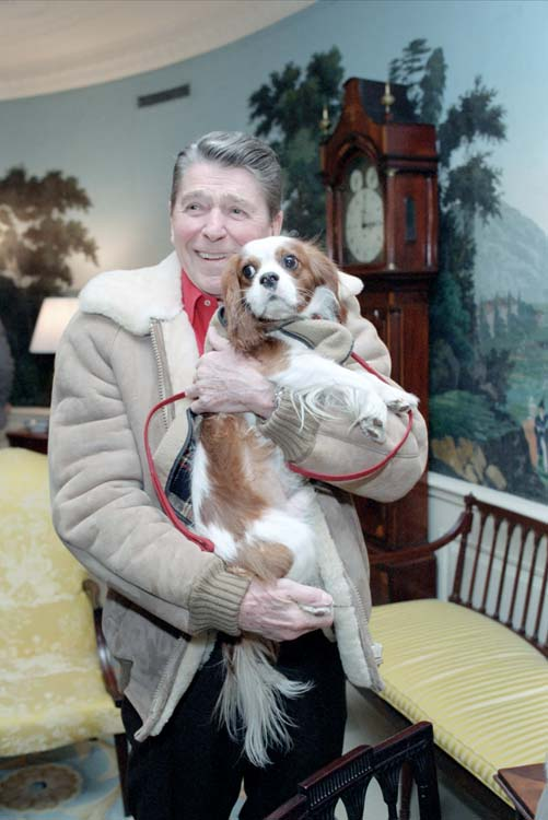 President Reagan holds Rex in the Diplomatic Reception Room, March 7, 1986. Courtesy Reagan Library.