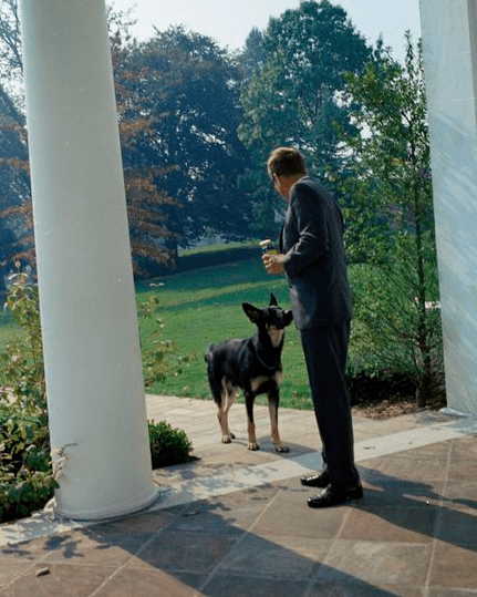 President Kennedy feeds Clipper at the West Wing, 1963.