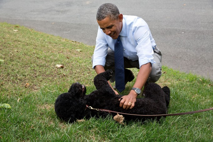 President Obama plays with Sunny on the South Lawn on her first day at the White House, Aug. 19, 2013.