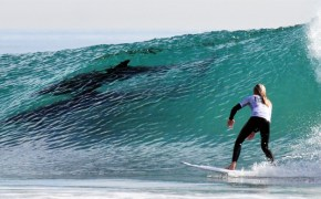 Wave-riding dolphins highlight Rincon Classic weekend