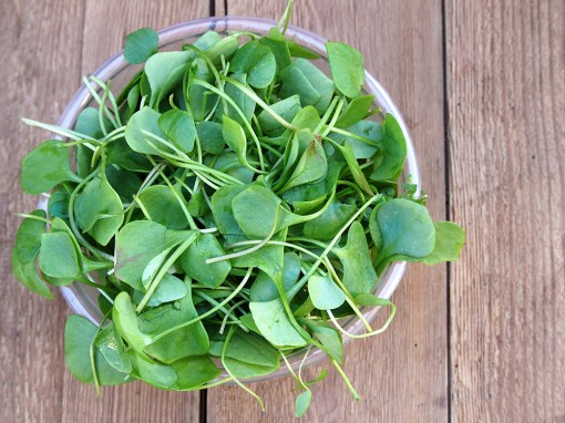 Watercress-Nutrition