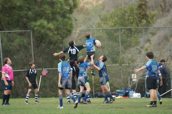 Stingrays in Action!