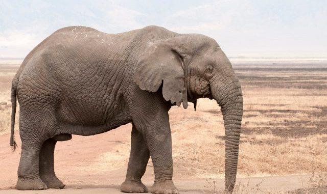 3 elephants put down after escaping KZN's iMfolozi park