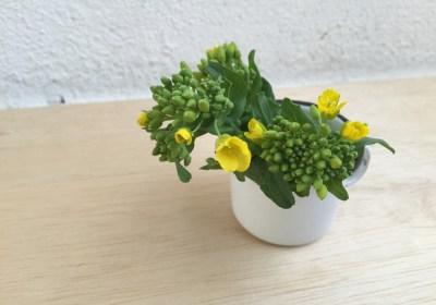 小松菜の菜花