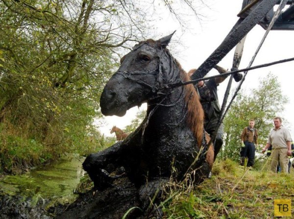 Как люди спасли лошадь (7 фото)