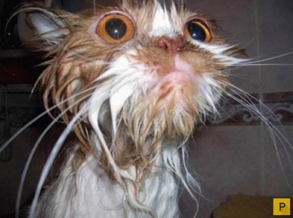 Забавные мокрые киски (14 фото)