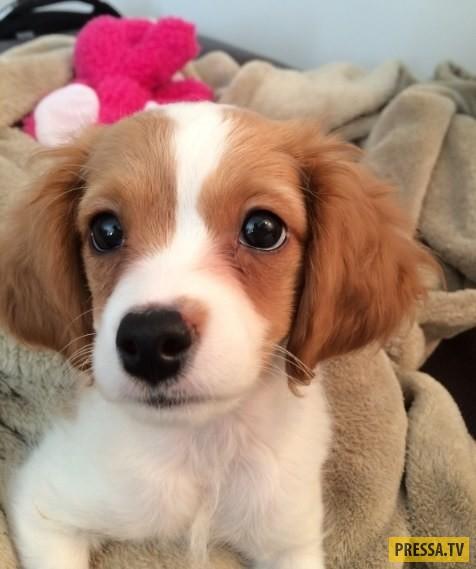 Фотографии маленьких щенков для всех, кто любит собак (21 ...