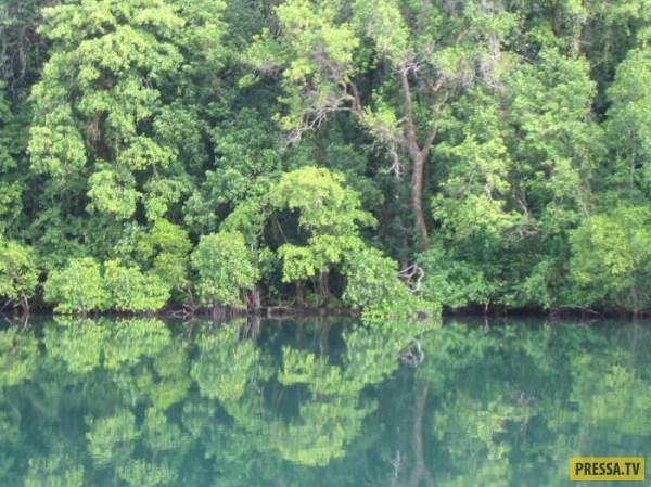 Самые удивительные леса нашей планеты 33 фото