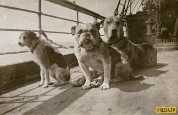 """Интересные факты о """"Титанике"""", которые вы могли не знать ..."""