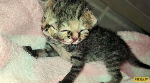 Бетти Би котенок с двумя лицами 5 фото