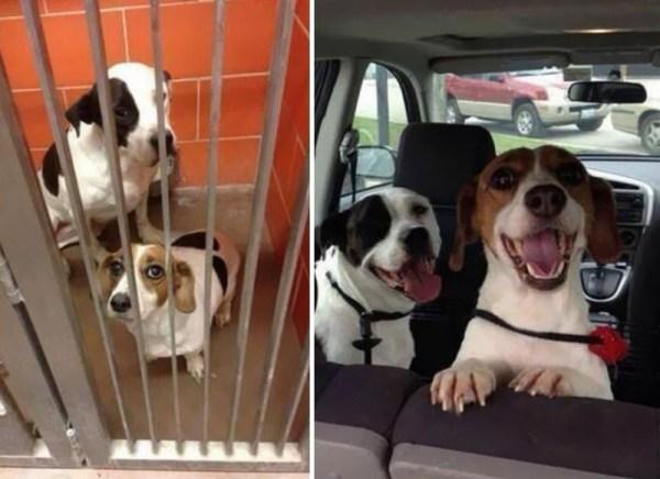 Трогательные фотографии собак до и после спасения, которые ...