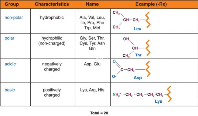 Table of amino acid groups