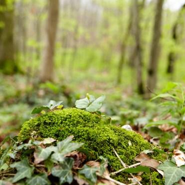 Themenführung Grüne Erde-Welt