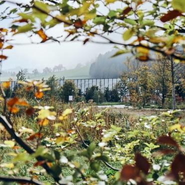 Herbst in der Grüne Erde-Welt