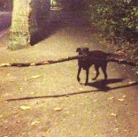 Madeline's dog that found the biggest stick and took out bikers in Vondelpark.