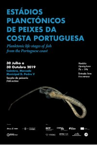 cartaz exposição fotográfica stádios planctónicos de peixes da costa portuguesa