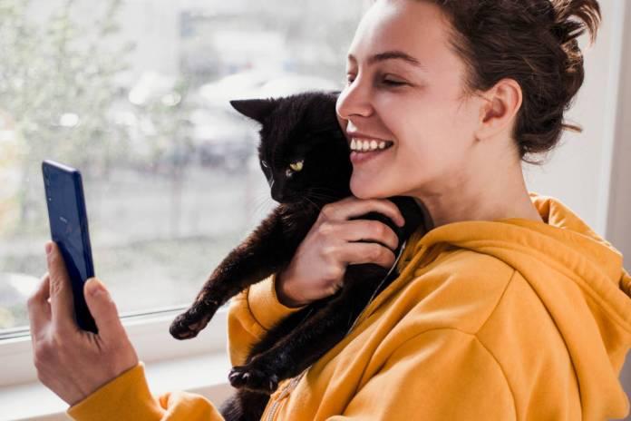 como fotografar gatos