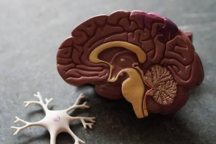 neurodesenvolvimento e epilepsia