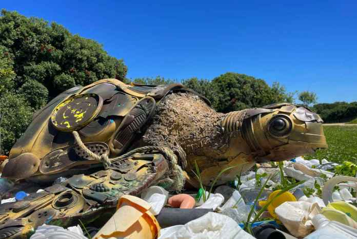 dia internacional da tartaruga