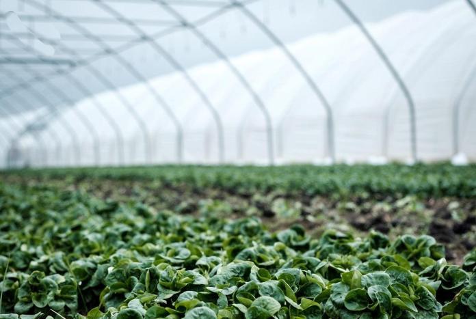 pequenos investimentos na exploracao agricola