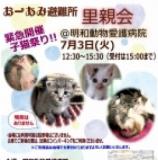 1505892 thum - 緊急開催 子猫祭り里親会
