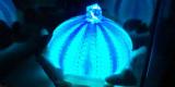 1601167 thum 1 - 本物のウニの殻で作る「ウニランプづくり」
