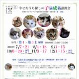 1601383 thum - 幸せおうち探しの子猫成猫譲渡会