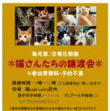 1602722 thum 1 - 猫さんたちの譲渡会
