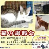 1605347 thum - 猫の譲渡会in明石