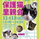 1607094 thum 1 - 保護猫里親会
