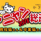1607459 thum 1 - 推しニャン総選挙