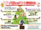 1607987 thum - 犬猫waKワク譲渡会