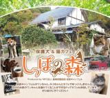 1608023 thum - 「保護犬&猫カフェ しっぽの森」OPEN