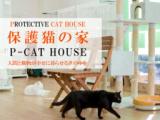 1609434 thum - 行き場を失った猫を守る保護猫の家「P-CAT HOUSE」を広めたい!