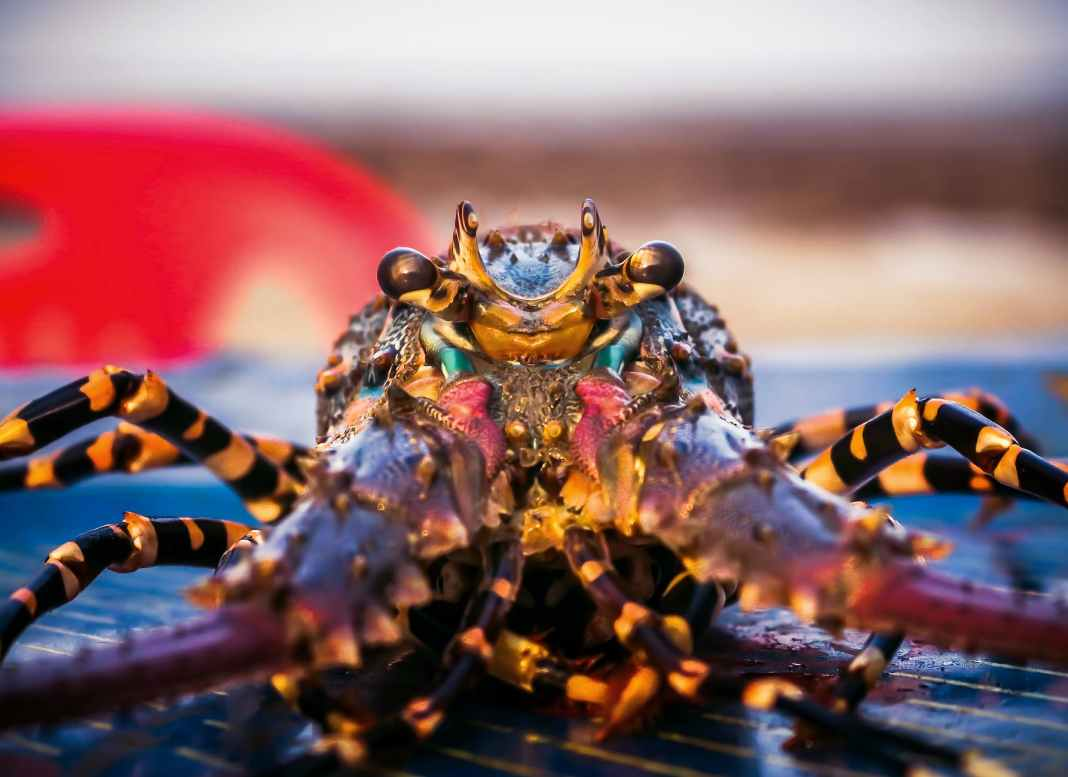 sea water animal crab