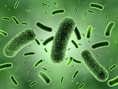 Bacteria in Food