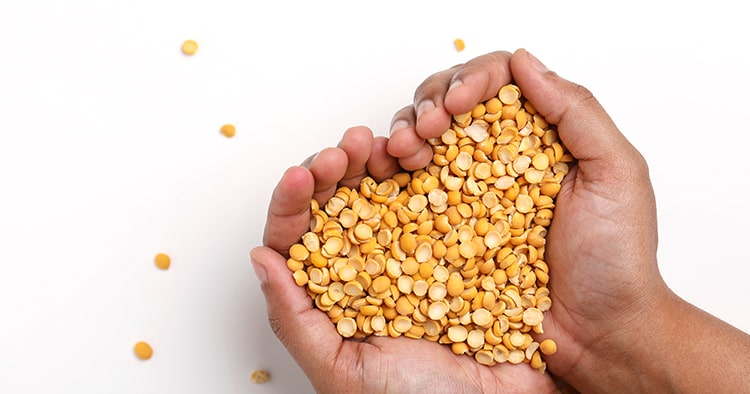 Dried chickpea lentils in hand on white background