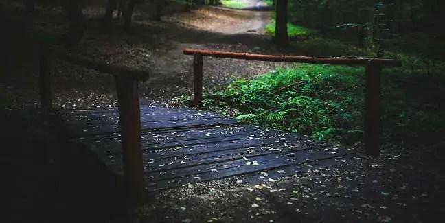leaf-bridge
