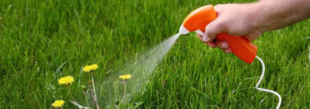 weed killer spray on grass