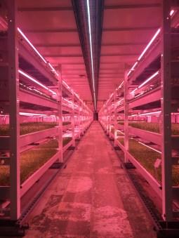 LED lit farm
