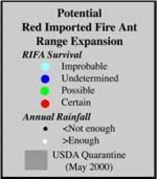fire ant legend